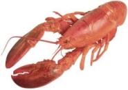 lagosta