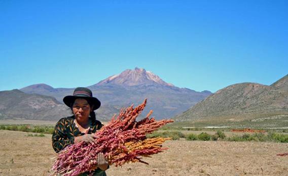 130124_food_quinoa2-crop-rectangle3-large